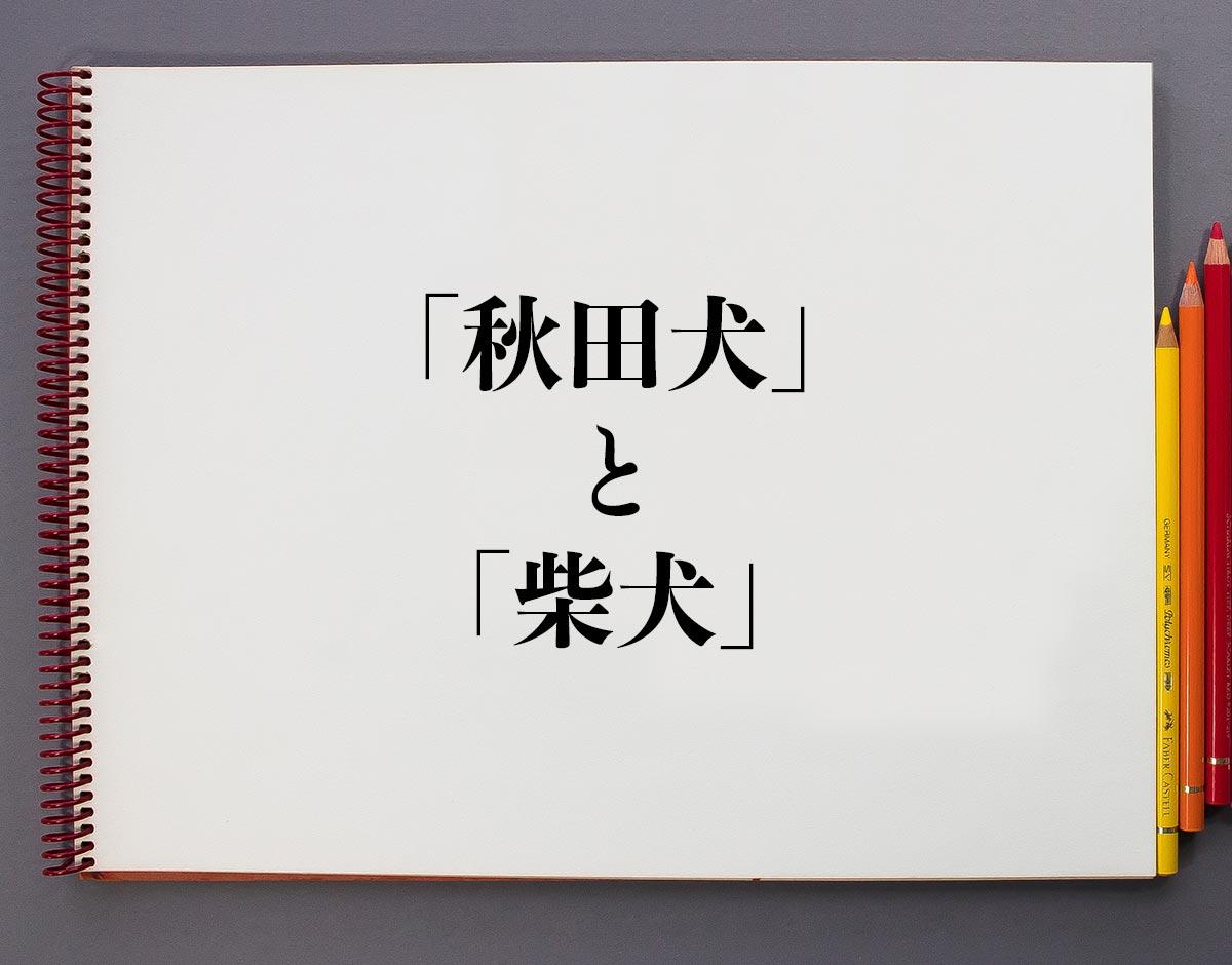 「秋田犬」と「柴犬」の違い