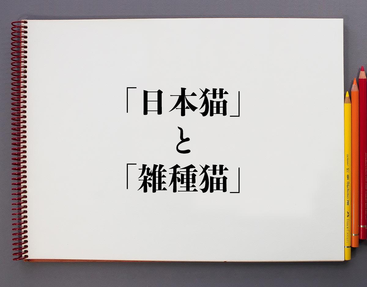 「日本猫」と「雑種猫」の違いとは?